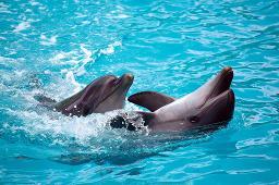 Delfine im Tiergarten Nürnberg